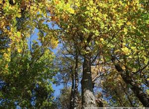 Коттеджный поселок Зеленый лес